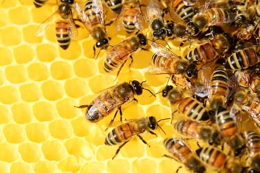 Bijensteken